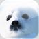 【アシカアザラシ-写真集-】いつでも何処でも癒される♪可愛いアシカとアザラシの写真集アプリ。