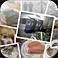 【Photo Mess】複数の写真を散りばめたような1枚の画像を作成できる!