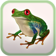 【FROG MINUTES】童心に帰って自然との触れ合い体験ができる癒し系アプリ。日本語ナレーション付き♪