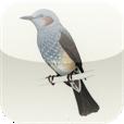 【ききみみずきん for iPhone】鳴き声をたよりに野鳥の種類を特定!アウトドアのお供に。