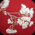 [今日の無料アプリ]  季節感あふれる美しいカレンダーアプリ【はなといろカレンダー】