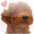 【世界の犬図鑑347選】愛犬家必携!世界の犬347種を図鑑形式で見て楽しめるアプリ。